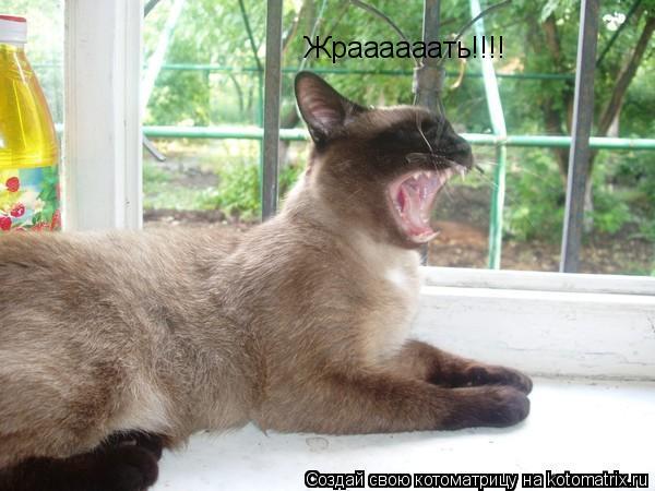 Котоматрица: Жраааааать!!!!