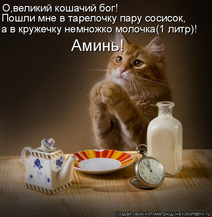 Котоматрица: О,великий кошачий бог! Пошли мне в тарелочку пару сосисок, а в кружечку немножко молочка(1 литр)! Аминь!