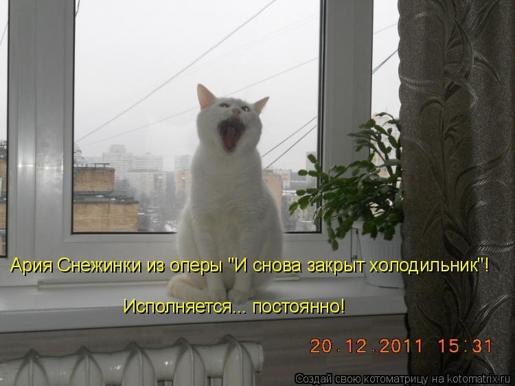 """Котоматрица - Ария Снежинки из оперы """"И снова закрыт холодильник""""!  Исполняется... п"""