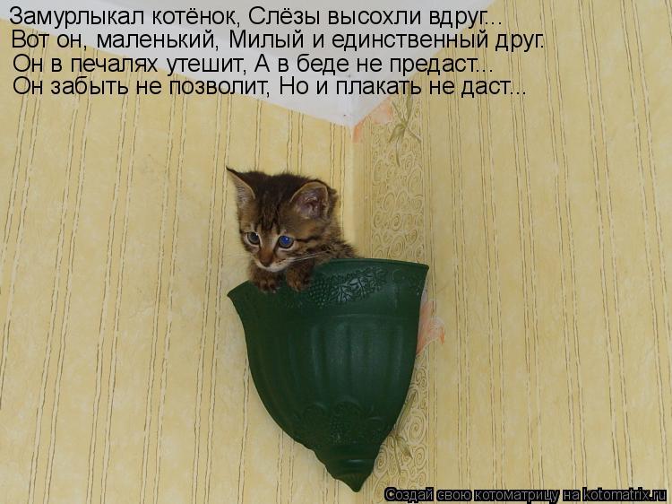 Котоматрица: Замурлыкал котёнок, Слёзы высохли вдруг...  Вот он, маленький, Милый и единственный друг. Он в печалях утешит, А в беде не предаст...  Он забыть