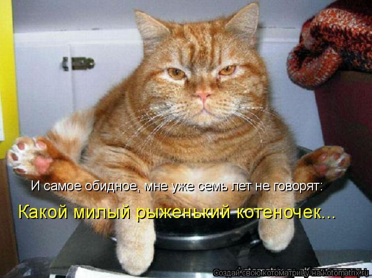 Котоматрица: И самое обидное, мне уже семь лет не говорят: Какой милый рыженький котеночек...