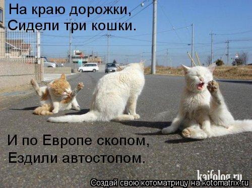 Котоматрица: На краю дорожки, Сидели три кошки. И по Европе скопом, Ездили автостопом.