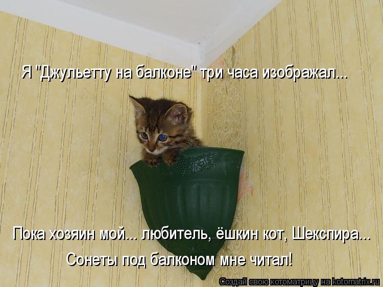 """Котоматрица: Я """"Джульетту на балконе"""" три часа изображал... Пока хозяин мой... любитель, ёшкин кот, Шекспира... Сонеты под балконом мне читал!"""