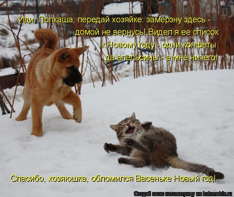 Котоматрица: Иди, Полкаша, передай хозяйке: замерзну здесь - домой не вернусь! Видел я ее список  да апельсины - а мне ничего! к Новому году - одни конфеты Сп