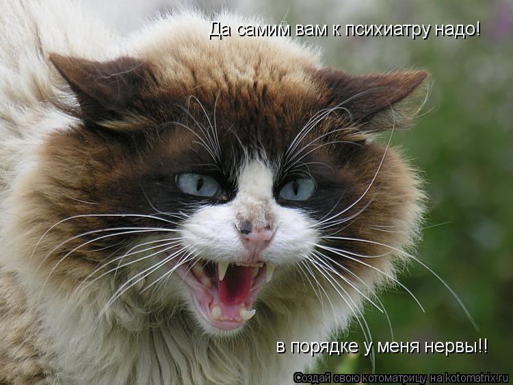 Котоматрица: Да самим вам к психиатру надо! в порядке у меня нервы!!