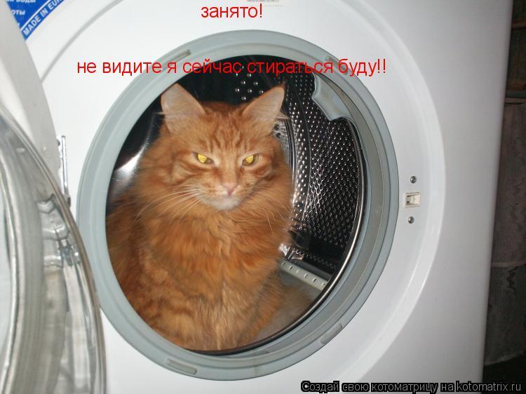 Котоматрица: занято! не видите я сейчас стираться буду!!