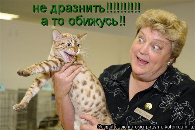 Котоматрица: не дразнить!!!!!!!!!! а то обижусь!!