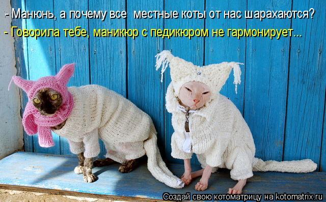 Котоматрица: - Манюнь, а почему все  местные коты от нас шарахаются? - Говорила тебе, маникюр с педикюром не гармонирует...