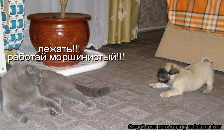 Котоматрица: лежать!!! лежать!!! работай моршинистый!!!