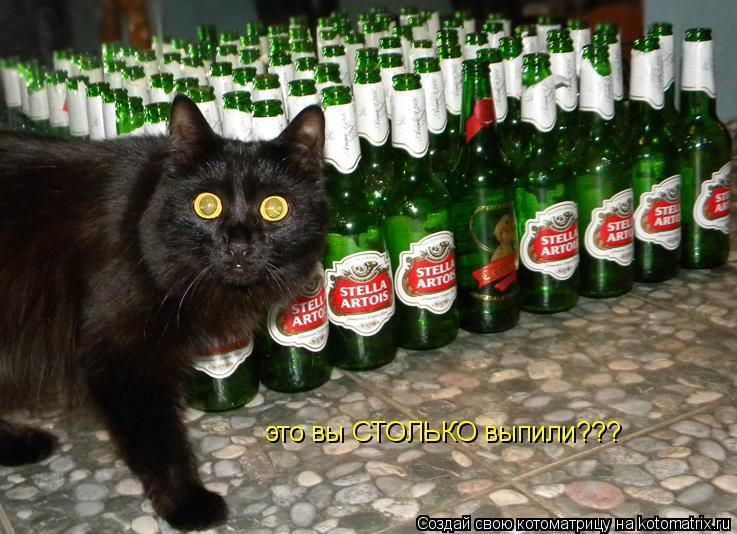 Котоматрица: это вы СТОЛЬКО выпили???
