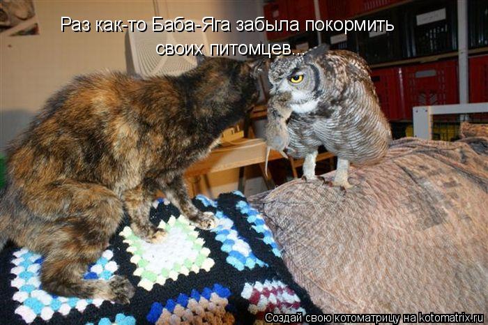 Котоматрица: Раз как-то Баба-Яга забыла покормить  своих питомцев...