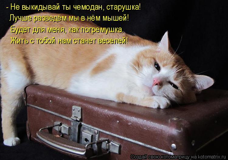 Котоматрица: - Не выкидывай ты чемодан, старушка! Лучше разведём мы в нём мышей! Будет для меня, как погремушка. Жить с тобой нам станет веселей!