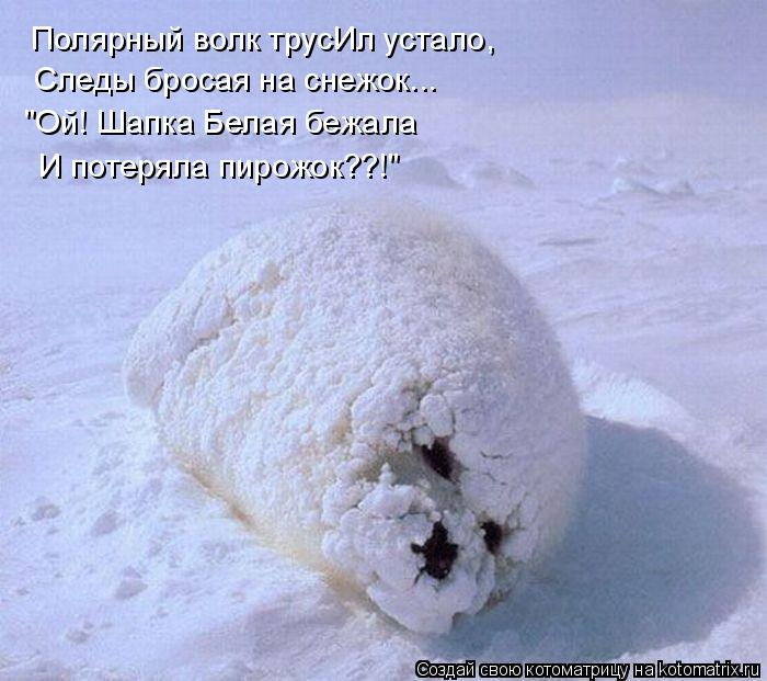 """Котоматрица: Полярный волк трусИл устало, Следы бросая на снежок... """"Ой! Шапка Белая бежала И потеряла пирожок??!"""""""