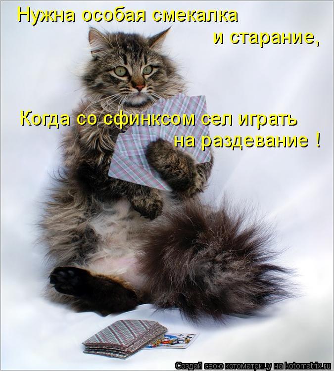 Котоматрица: Нужна особая смекалка  и старание, Когда со сфинксом сел играть на раздевание !