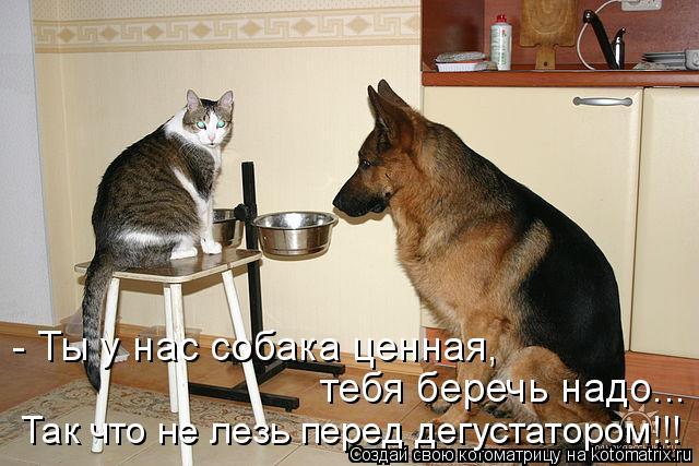 Котоматрица - - Ты у нас собака ценная,  тебя беречь надо... Так что не лезь перед д