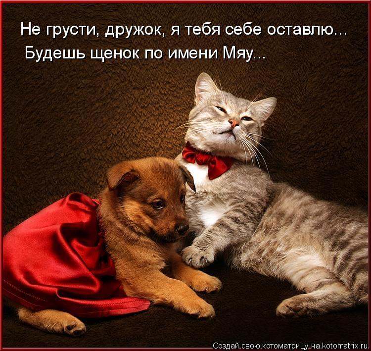 Котоматрица: Не грусти, дружок, я тебя себе оставлю...  Будешь щенок по имени Мяу...