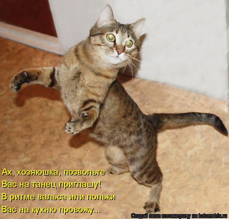 Котоматрица: Ах, хозяюшка, позвольте Вас на танец приглашу! В ритме вальса или польки Вас на кухню провожу...