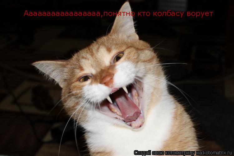 Котоматрица: Ааааааааааааааааа,понятно кто колбасу ворует