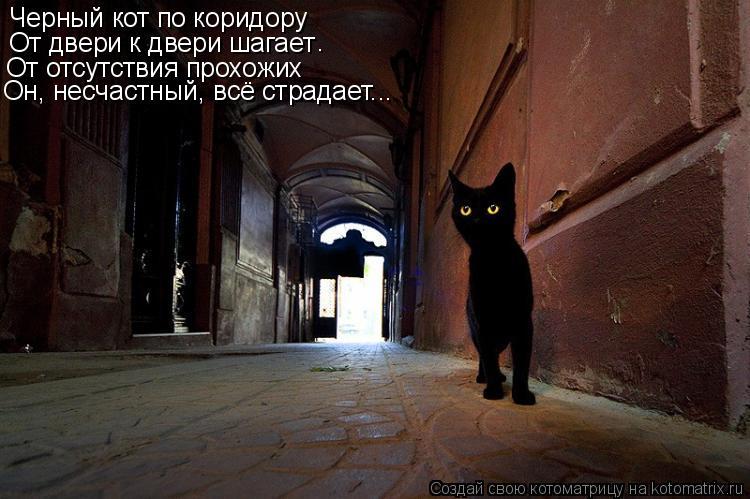 Котоматрица: Черный кот по коридору От двери к двери шагает От отсутствия прохожих Он, несчастный, всё страдает... .