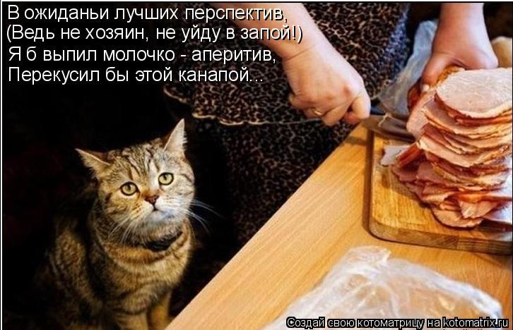 Котоматрица: (Ведь не хозяин, не уйду в запой!) Перекусил бы этой канапой... Я б выпил молочко - аперитив, В ожиданьи лучших перспектив,