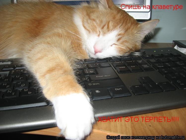 Котоматрица: Спишь на клаветуре  ХВАТИТ ЭТО ТЕРПЕТЬ!!!!