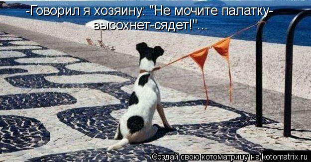 """Котоматрица: -Говорил я хозяину: """"Не мочите палатку- высохнет-сядет!""""..."""