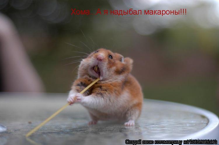 Котоматрица: Хома...А я надыбал макароны!!!