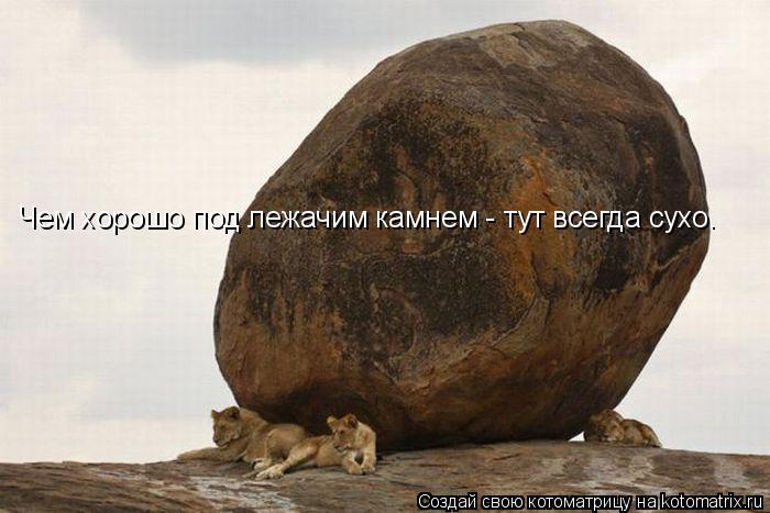 Котоматрица: Чем хорошо под лежачим камнем - тут всегда сухо.