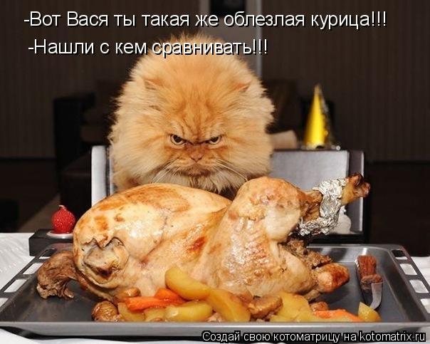 Котоматрица: -Вот Вася ты такая же облезлая курица!!! -Нашли с кем сравнивать!!!