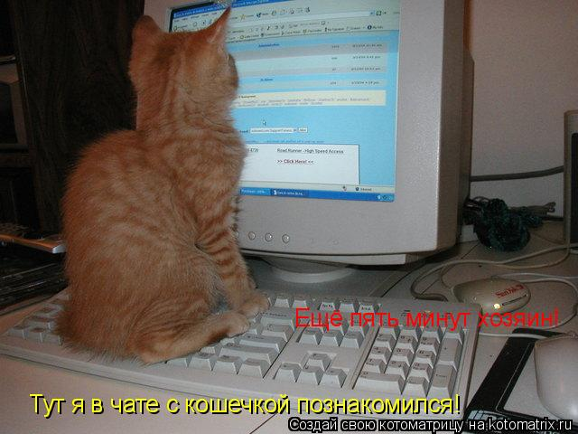 Котоматрица: Ещё пять минут хозяин!  Тут я в чате с кошечкой познакомился!