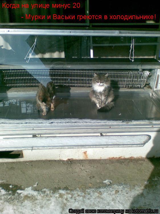 Котоматрица: Когда на улице минус 20 - Мурки и Васьки греются в холодильнике!