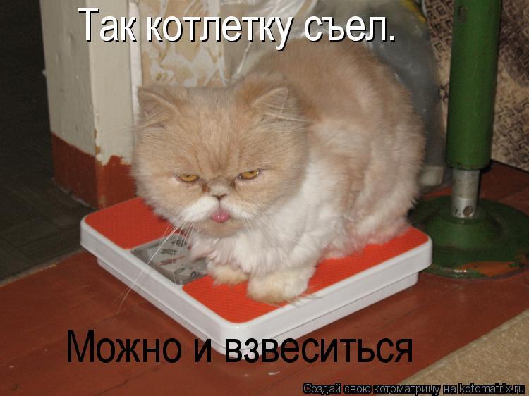 Котоматрица: Так котлетку съел. Можно и взвеситься