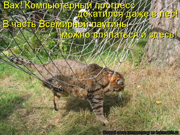 Котоматрица: Вах! Компьютерный прогресс  докатился даже в лес! В часть Всемирной паутины можно вляпаться и здесь!