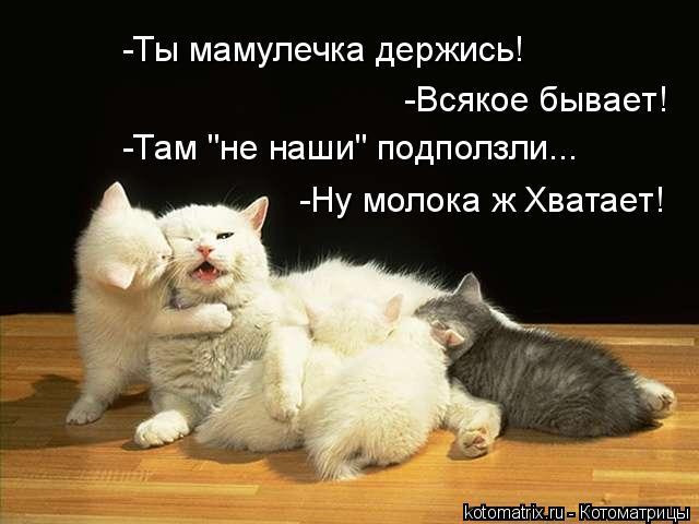 """Котоматрица: -Ты мамулечка держись! -Всякое бывает! -Там """"не наши"""" подползли... -Ну молока ж Хватает!"""