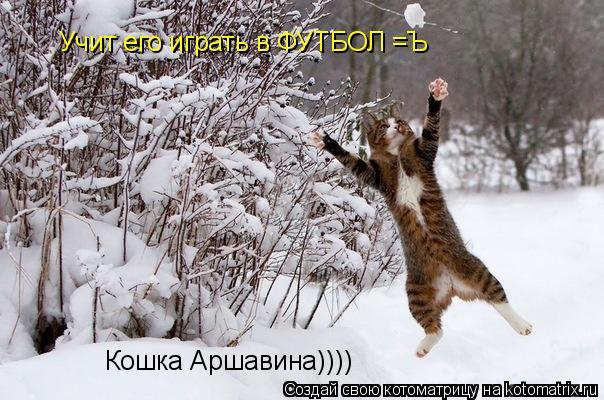 Котоматрица: Кошка Аршавина)))) Учит его играть в ФУТБОЛ =Ъ