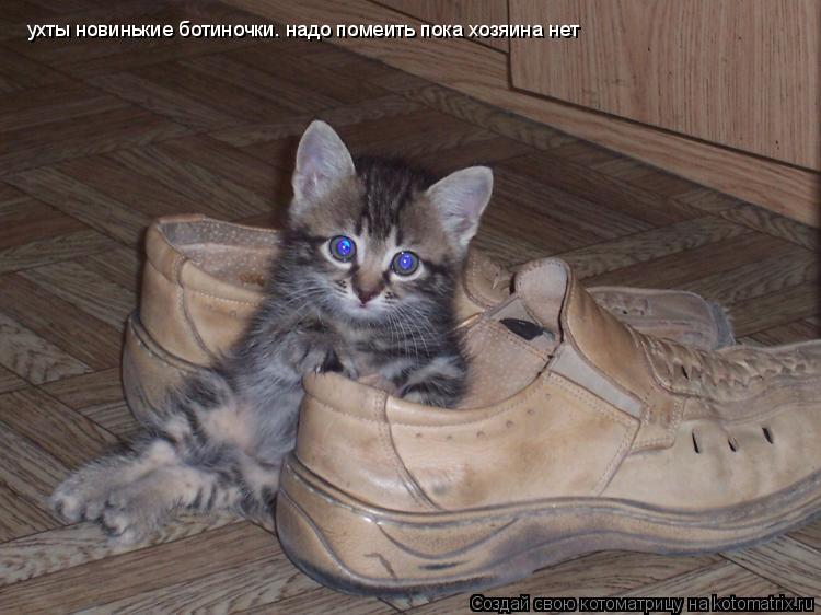 Котоматрица: ухты новинькие ботиночки. надо помеить пока хозяина нет