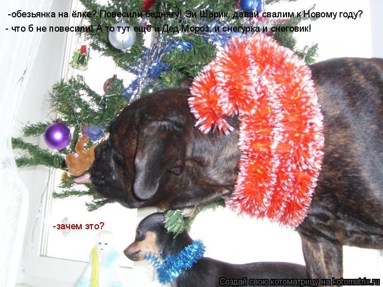 Котоматрица: -обезьянка на ёлке? Повесили беднягу! Эй Шарик, давай свалим к Новому году? -зачем это? - что б не повесили! А то тут ещё и Дед Мороз, и снегурка