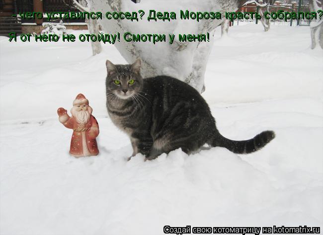 Котоматрица: - чего уставился сосед? Деда Мороза красть собрался? Я от него не отойду! Смотри у меня!