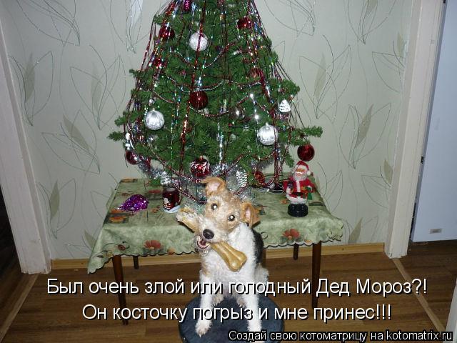 Котоматрица: Был очень злой или голодный Дед Мороз?! Он косточку погрыз и мне принес!!!