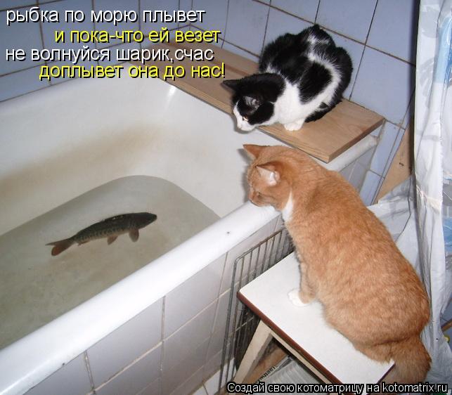 Котоматрица: рыбка по морю плывет и пока-что ей везет не волнуйся шарик,счас доплывет она до нас!
