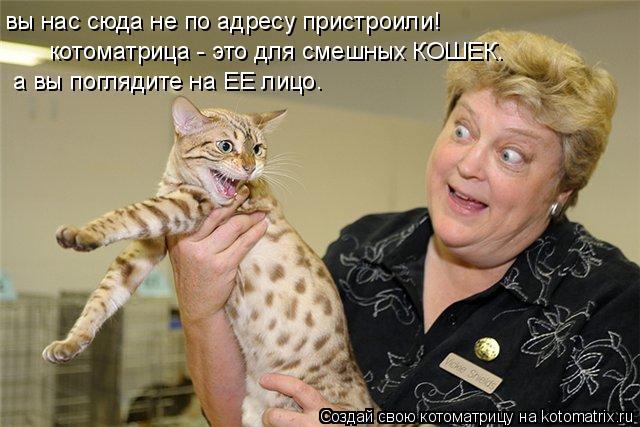 Котоматрица: вы нас сюда не по адресу пристроили! а вы поглядите на ЕЕ лицо. котоматрица - это для смешных КОШЕК.