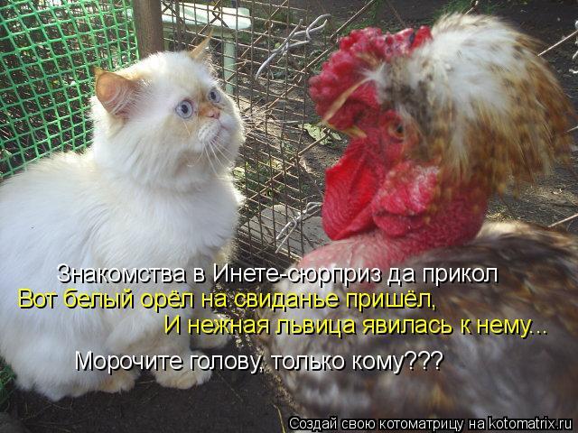 Котоматрица: Знакомства в Инете-сюрприз да прикол Вот белый орёл на свиданье пришёл, И нежная львица явилась к нему... Морочите голову, только кому???