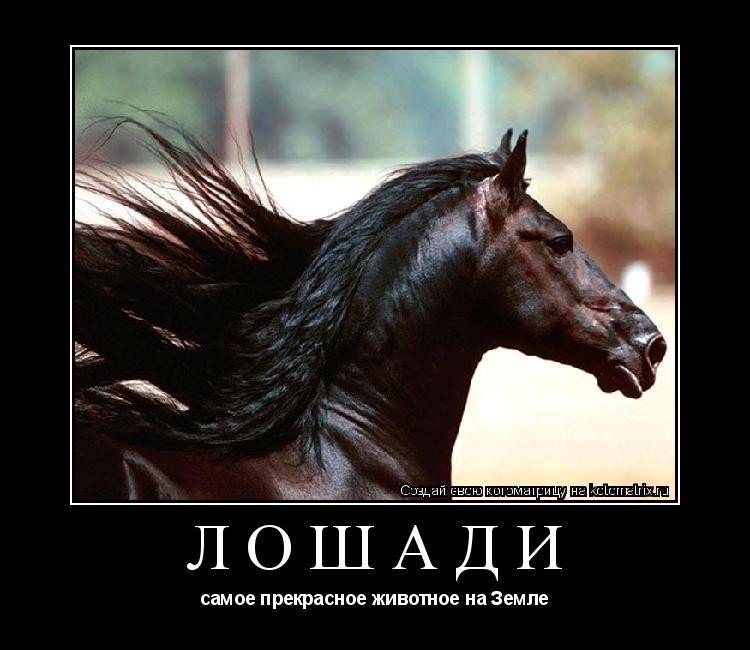 Котоматрица: Лошади самое прекрасное животное на Земле