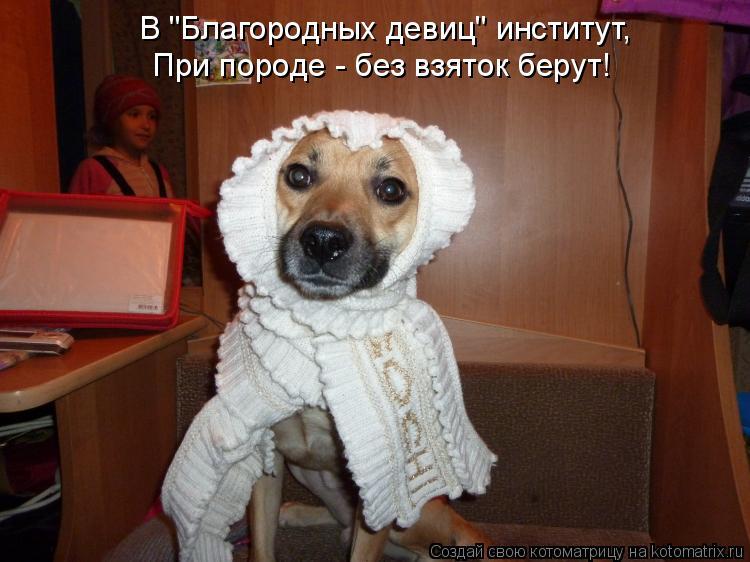 """Котоматрица: В """"Благородных девиц"""" институт, При породе - без взяток берут!"""