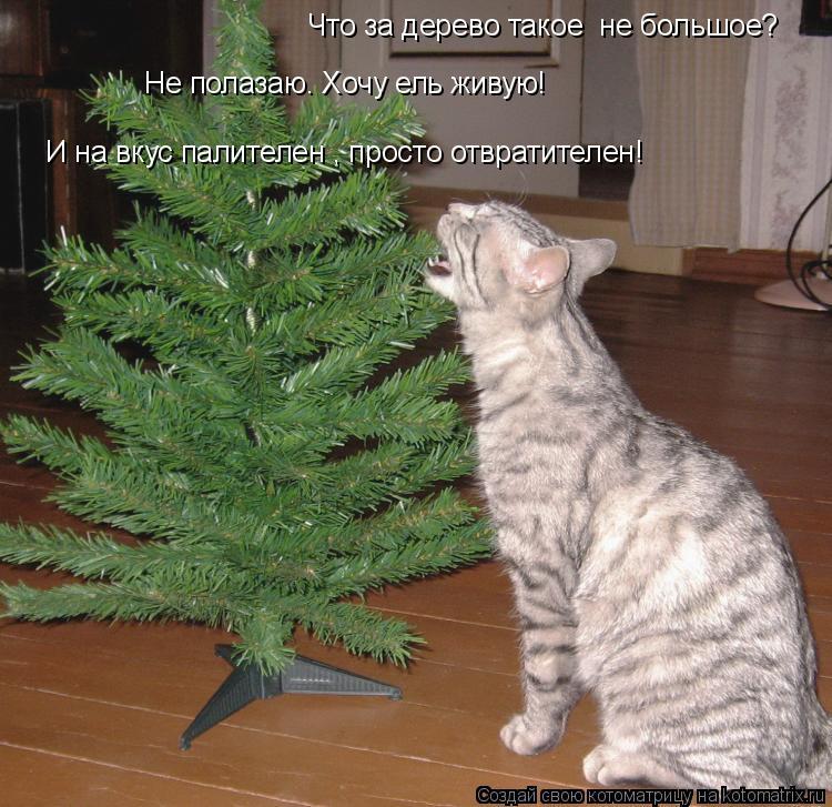 Котоматрица: Что за дерево такое  не большое? Не полазаю. Хочу ель живую! И на вкус палителен , просто отвратителен!
