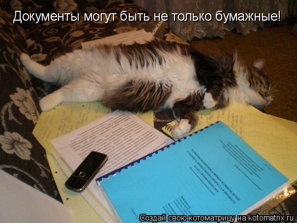 Котоматрица: Документы могут быть не только бумажные!