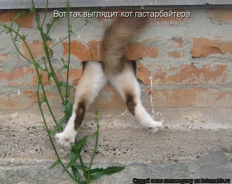 Котоматрица: Вот так выглядит кот гастарбайтера.