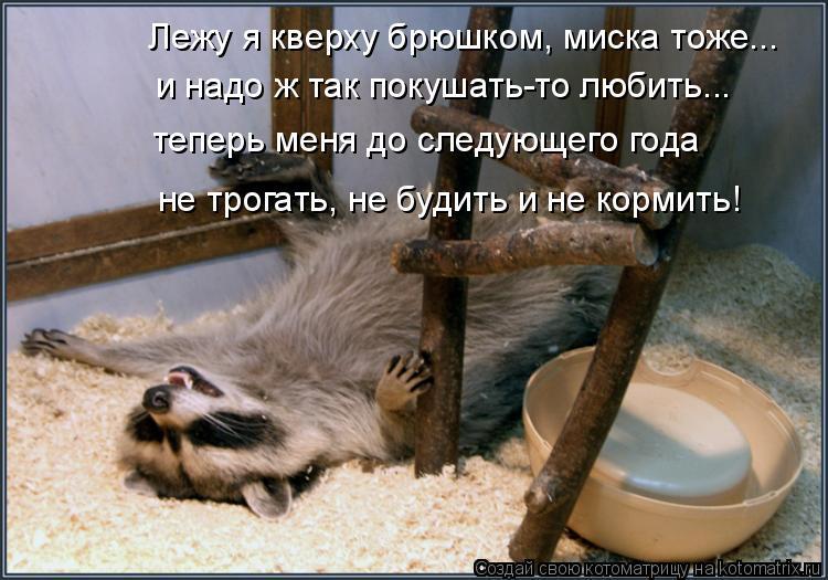 Котоматрица: Лежу я кверху брюшком, миска тоже... и надо ж так покушать-то любить... теперь меня до следующего года не трогать, не будить и не кормить!