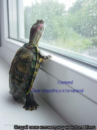 Котоматрица: Хозяева!  Окно откройте,и я почапала!