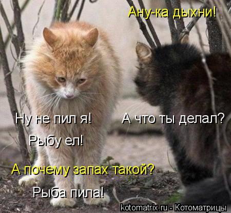 http://kotomatrix.ru/images/lolz/2011/12/25/1069515.jpg